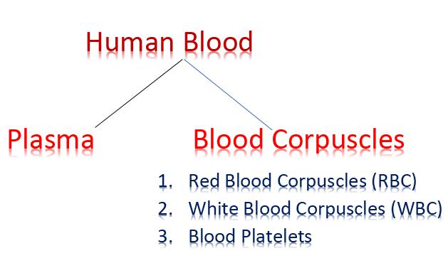 human-blood